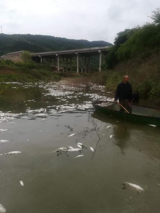 鱼塘4万公斤鱼全死光:检出石油类污染物超标572倍
