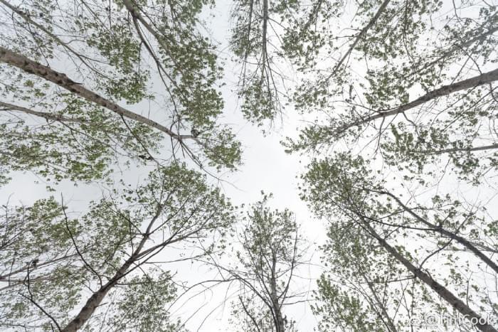 库克发微博庆祝植树节,呼吁保护森林资源的照片 - 4