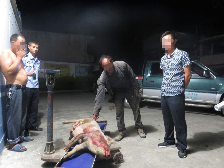 猪被游客车撞死主人高价索赔2500元 官方规定来了