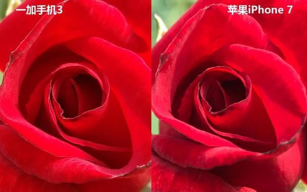 iPhone 7拍照对比一加3的照片 - 13