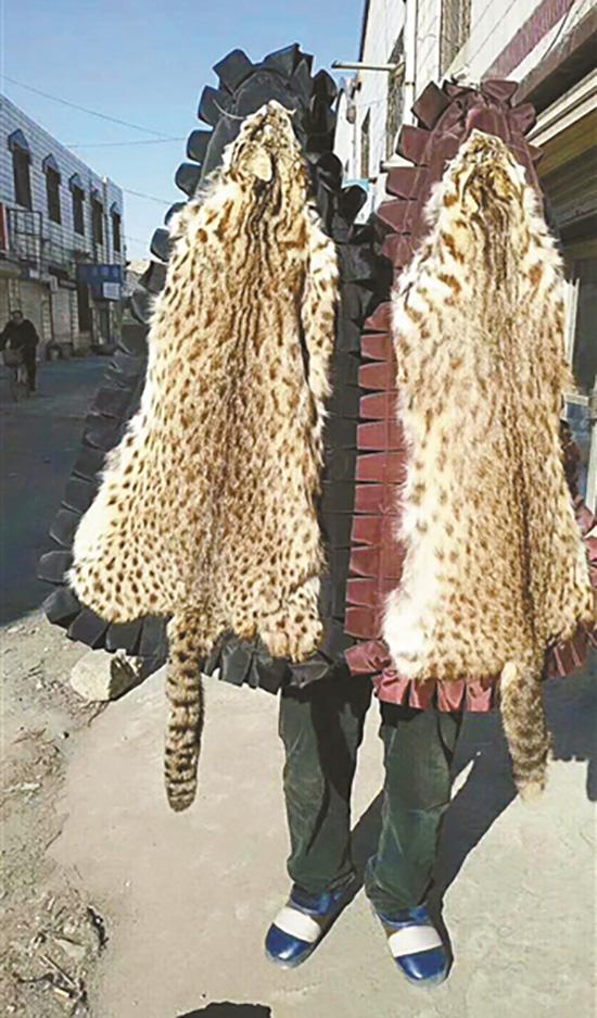 网络拍卖平台售卖野生动物制品 虎皮象牙熊胆均有