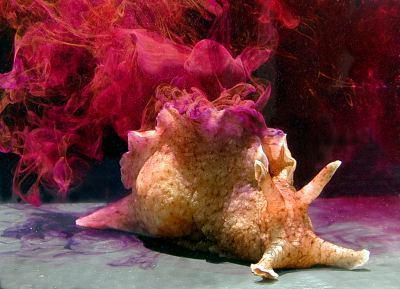 科学家把海螺的记忆移植给了另一只 未来人也可以?