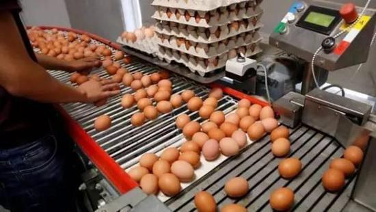号称食品最安全国家全球销售毒鸡蛋 欧洲人怒了!