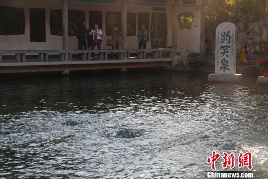 10月11日15:00,趵突泉实时地下水位为28.62米,三股水喷涌有力。 孙婷婷 摄