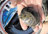 小乌龟空间旅行平安归来 近太空旅游或将不是梦