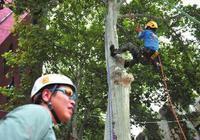 西北大学开设攀树课:女生比男生选的多(图)