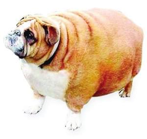 看着宠物一圈圈长胖,还觉得挺萌挺可爱,其实,宠物管不住嘴,也同样影响