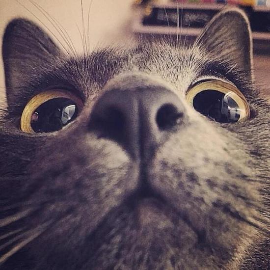 比特币请靠边:区块链云养猫售80万一只