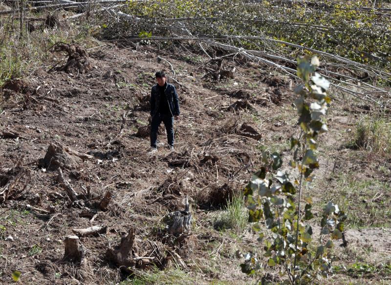 农民多棵杨树被毁无人赔偿 村委会:施工队推错了