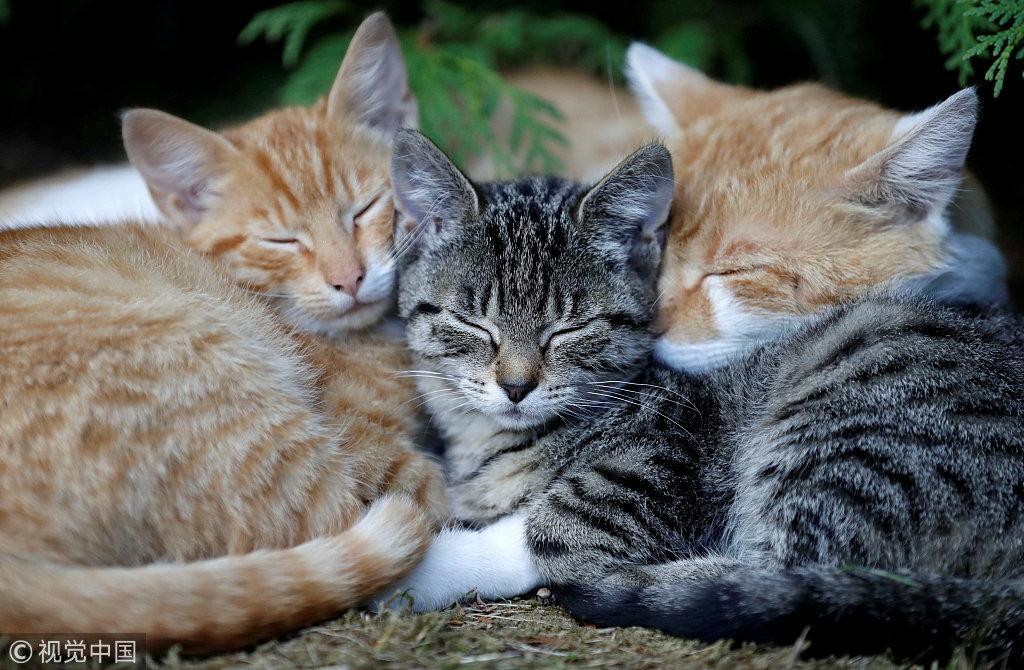 猫奴怒了!新西兰村庄禁养猫 称会破坏生物多样性