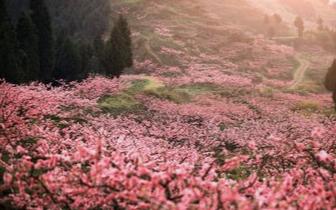 以花为媒  助推清远乡村振兴