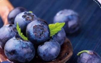 石笋山万斤富硒蓝莓成熟啦!采摘走起~