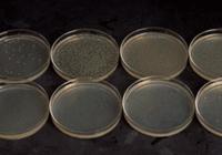 科学家为微生物设自毁开关,预防造成意外危害