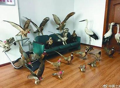 主播晒珍贵鸟类标本遭举报4名嫌疑人私藏枪支被抓