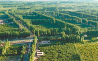 阿克苏:植树治沙三十载 风沙之源变绿洲果园