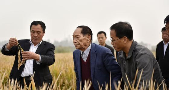"""袁隆平\""""超级稻\""""亩产1149公斤 再创"""