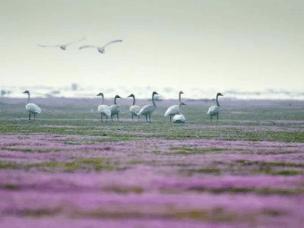 都昌重现鄱阳湖花海,这个秋季不太冷!