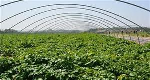哈尔滨与台湾地区共同打造高端生态农业