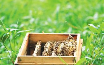 """5·20世界蜜蜂日 琼中""""三箭齐发""""打造蜂蜜金名片"""