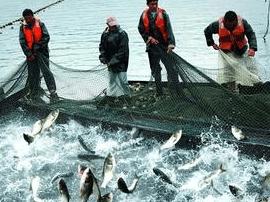 连江马鼻镇拟建渔业特色小镇 总体规模约七万亩
