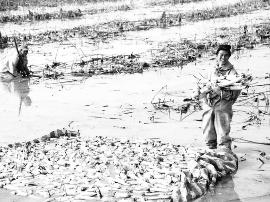 永济市韩阳镇大力发展莲藕种植产业 助农增收