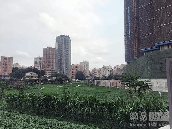 易眼看房| 龙华福城新盘低调推出 周边尽是菜园