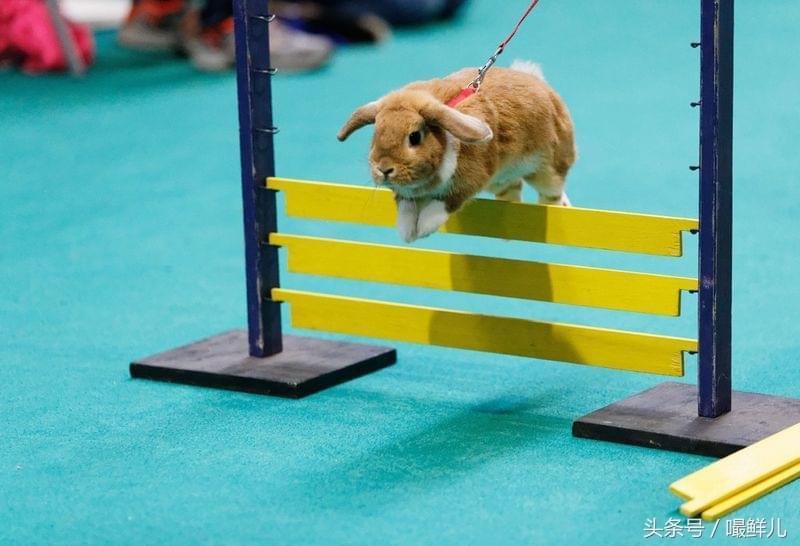 世界上最奇葩动物比赛