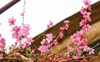 春色满园 等你赴一场春天的约会
