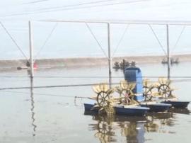 上洋:冬棚养殖降低对虾养殖风险