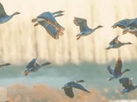 姜山湿地秘境探访 候鸟成群结队飞来安家