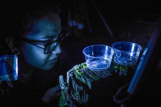 伐木赚钱能赚几个钱?萤火虫旅游引爆当地经济