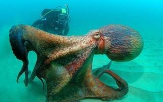 摄影师实拍 来自海洋深处的危险