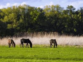 塔城库鲁斯台草原湿地风景美如画
