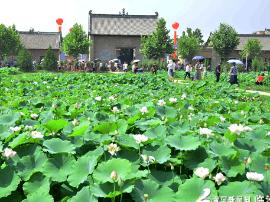襄汾第六届燕村荷花文化旅游节开幕 为期三天