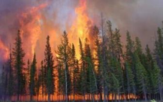 长治市林业生态建设暨森林防火工作会召开