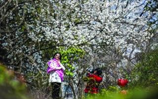 赏花看树踏青去 撷取春日好韶光