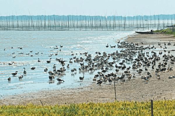 广佛跨界流域拟划为禁养区 佛山拟出新政治滩涂养殖
