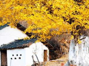5个超美的小村小寨,采菊东篱下