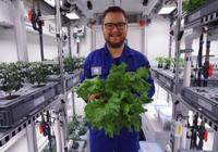 科学家在南极温室首次收获绿色蔬菜