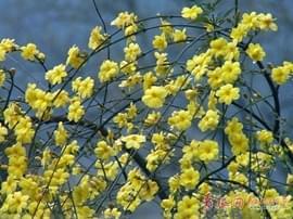 赏花季来了!青岛发布今年首期花期预报