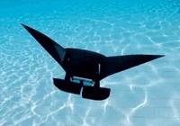 新加坡科学家打造蝠鲼机器人 能在水下畅游10小
