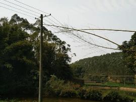 江门鹤山供电局:紧急处理两起外力破坏线路故障