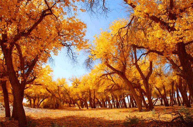 金秋国庆哪里游?阿拉善邀重庆市民穿越沙漠看胡杨林