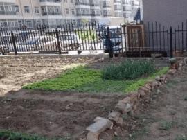 长春市民毁绿私种的小菜园丰收了?小心被处罚!