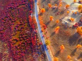 金秋季节新疆塔里木的美景