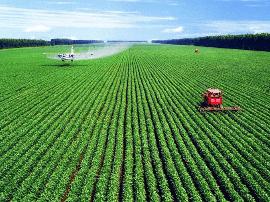 福建晋江借力台湾团队发展现代农业