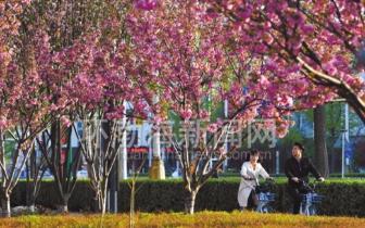 唐山:市民在路上行走 仿佛画中游