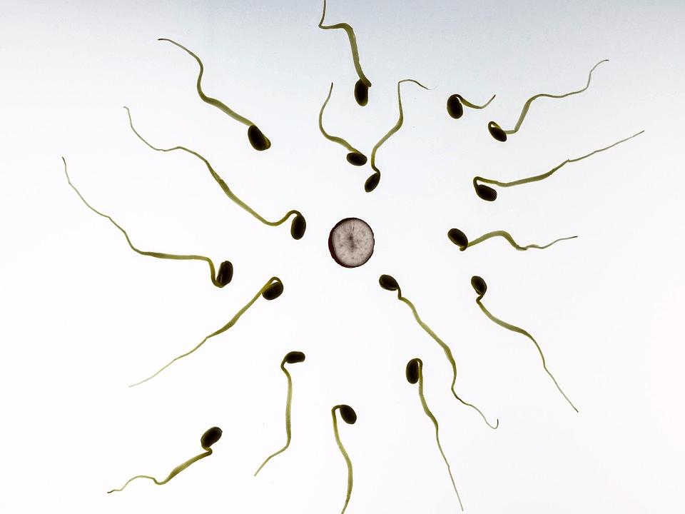 精荒!40年间全球男性精子浓度下降59.3%