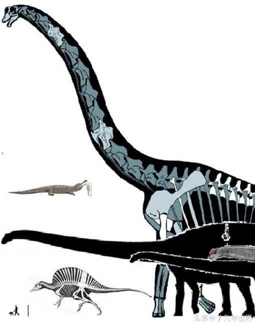 体型最大的十种恐龙,