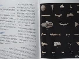 """首期考古报告问世 """"南海I号""""神秘面纱初揭"""
